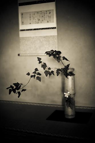 Feuilles noires, fleur blanche