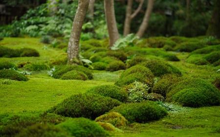 For t meraude japon kenrokuen kanazawa kyoto mousse - Jardin japonais mousse ...