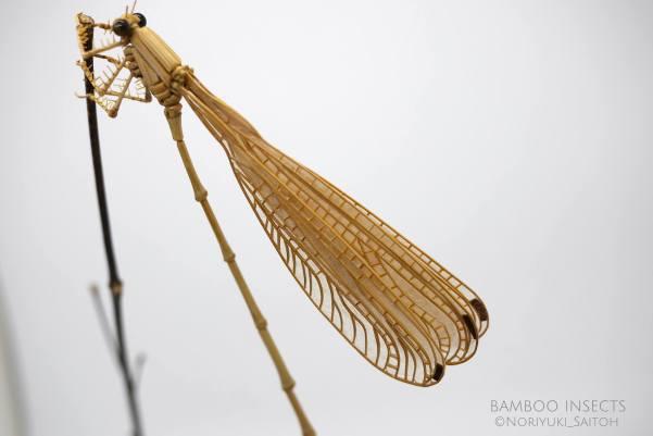 (Megaloprepus caerulatus) 01