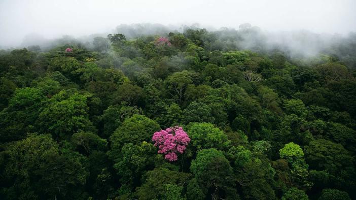 arbre sacré des incas