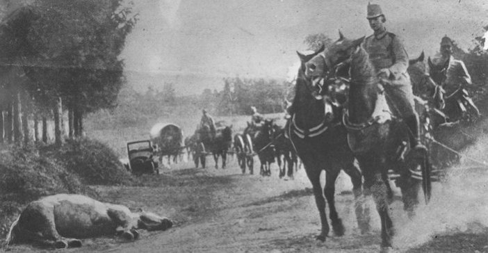 angoisse chevaux cadavres congénères bnf