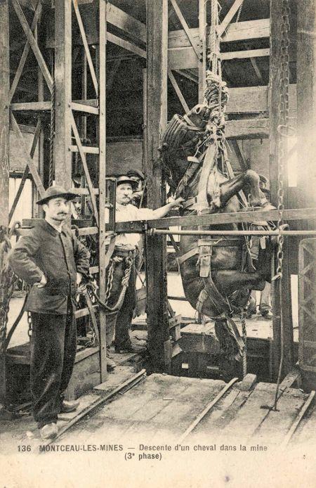 cheval mine charbon