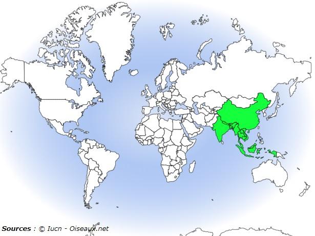 localisation pirolle verte